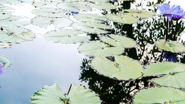 Lotus dolly shot. video