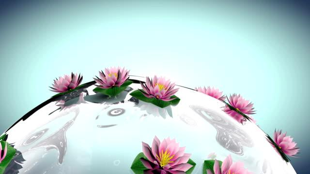 Su dünya üzerindeki Lotus çiçeği video