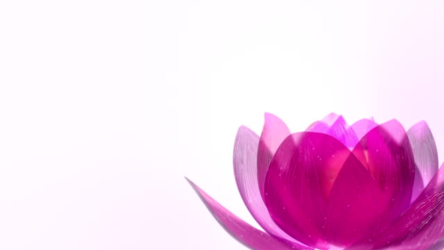 Lotus Flower video