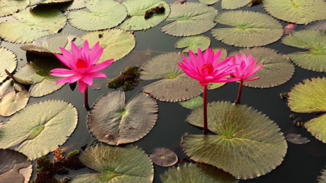 lotusblomma - korslagda ben bildbanksvideor och videomaterial från bakom kulisserna