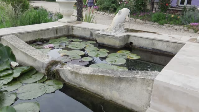 Lotus flowers in the fountain on front yard