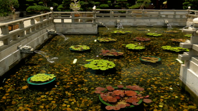 lotus in pond with dragon's heads a continuous stream of water into a pond - gargoyle video stock e b–roll