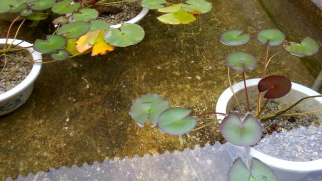 lotus foglie galleggianti sull'acqua riflessione sul tetto cinese tranquilla - gambe incrociate video stock e b–roll