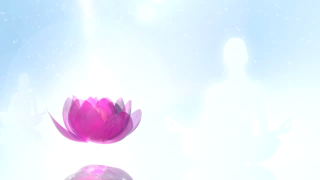 Lotus Meditation Young woman meditate, while a lotus blossom is opening. lotus position stock videos & royalty-free footage