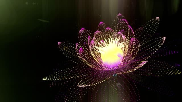lotus - armonia video stock e b–roll