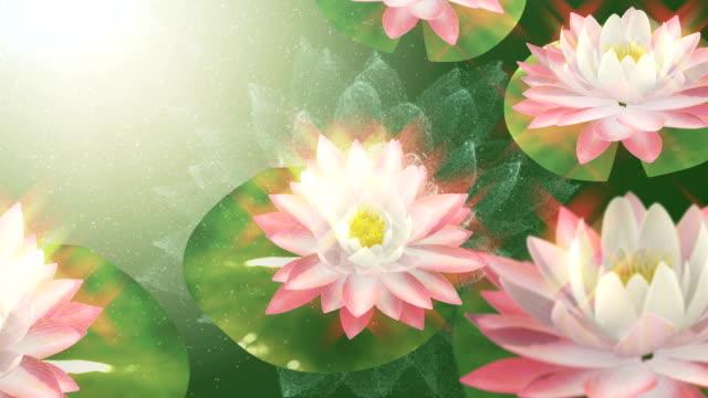 vídeos de stock e filmes b-roll de lotus - buda