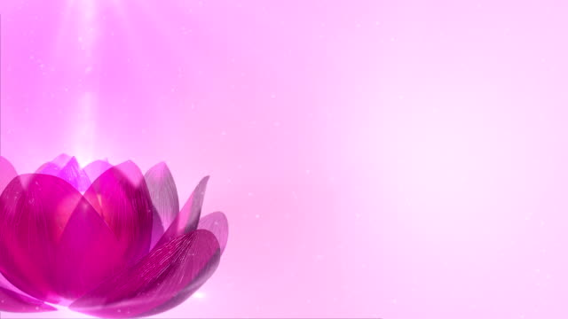 Lotus video