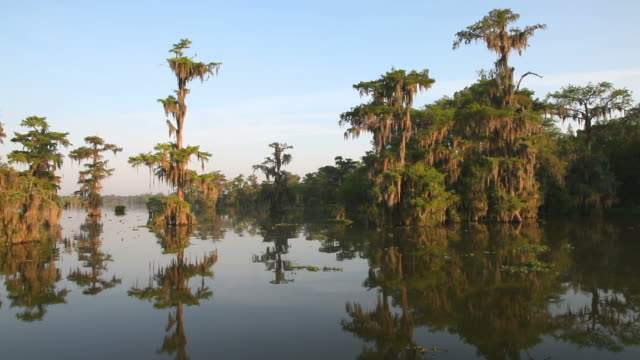 stockvideo's en b-roll-footage met louisiana bayou - broek