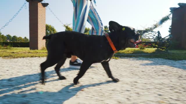 ich liebe spaziergänge mit meinem hund. - hundesitter stock-videos und b-roll-filmmaterial