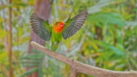 istock SLO MO Lovebird landing on a branch 993003430