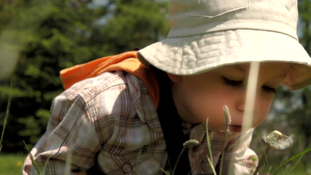 Lovely boy with persistence blowing dandelion on the meadow. video
