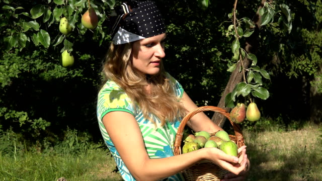 Lovely country girl pick ripe fruit from tree branch and eat pear with satisfaction. 4K Lovely country girl pick ripe fruit from tree branch and eat pear with satisfaction. Woman holding basket full of pears. Static closeup shot. 4K pear stock videos & royalty-free footage