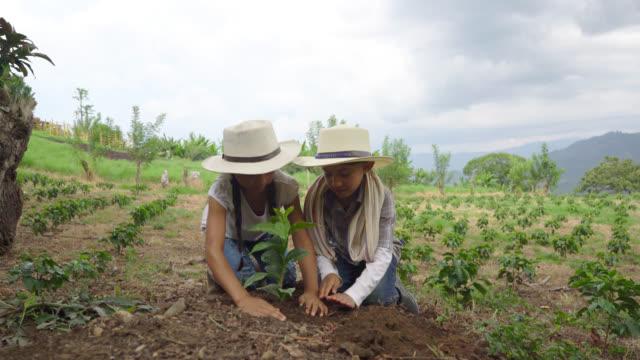 Beau couple d'enfants plantant un caféier avec leurs mains - Vidéo