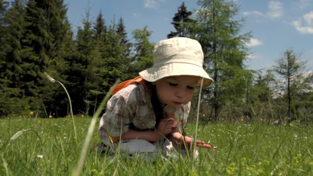 Lovely little boy blowing dandelion on a green meadow. video