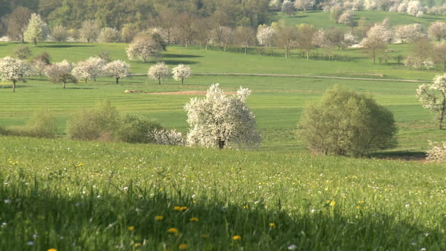lovely shots of springs in switzerland video