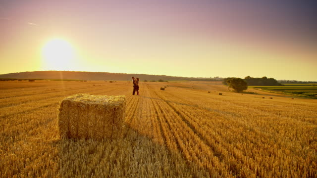 WS Loving couple in the field of wheat at sunset video