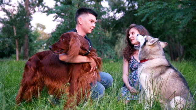 Loving couple with their dogs having a rest outdoors - throws a stick to a dog at sunset Loving couple with their dogs having a rest outdoors - throws a stick to a dog at sunset, slow motion irish setter stock videos & royalty-free footage