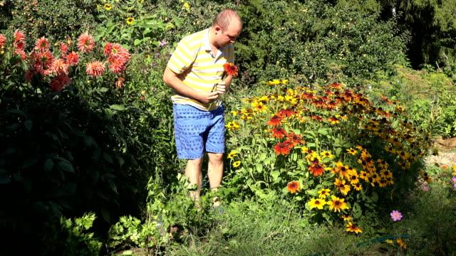 Loving husband boyfriend guy man in shorts picking rudbeckia flowers in sunny garden. 4K