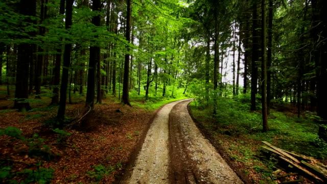 Tief Luft Tracking Schuss von einem Coniferous Forest – Video