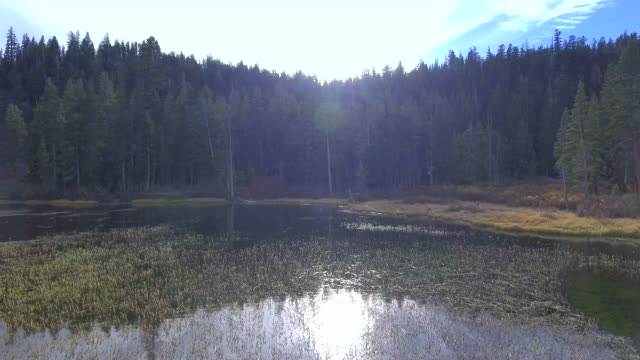 Low altitude aerial shot going from lake towards trees in Mammoth Lakes,  CA