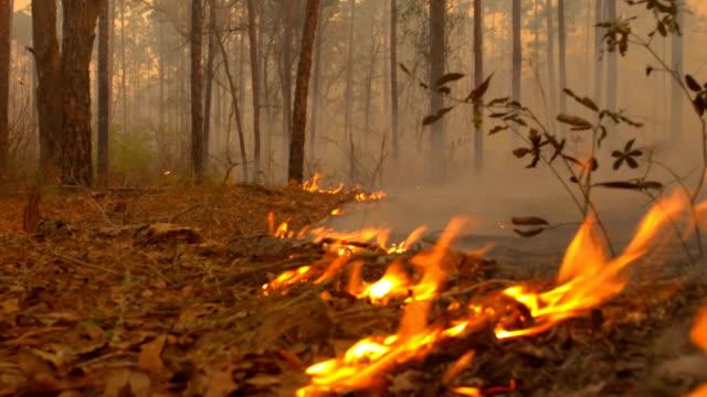 stockvideo's en b-roll-footage met lage hoek, nauwe gezien van vlam front doorlopen bosbodem - bosbrand
