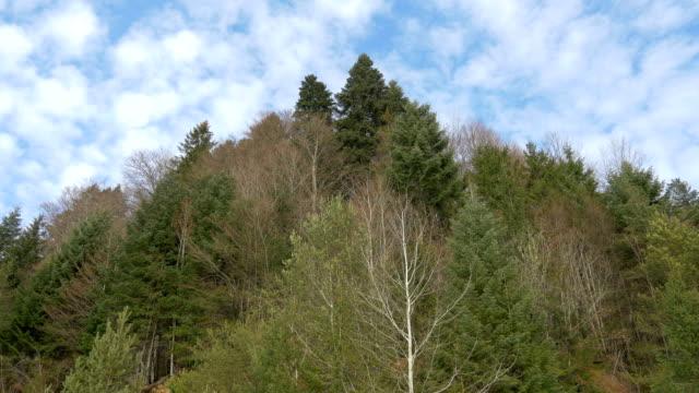 森林の低角図 - ローアングル点の映像素材/bロール