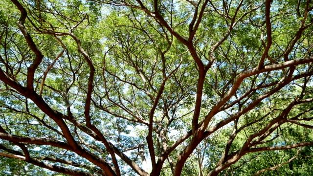 古い大きな木の低角図。 - ローアングル点の映像素材/bロール