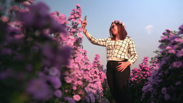 low angle view of Asian mid happy traveler woman with sweater sightseeing on Margaret Aster flowers field in garden under sunset in winter season at Chiang Mai, Thailand, having selfie by using smartphone. Concept of Agriculture farm with blossom flower.