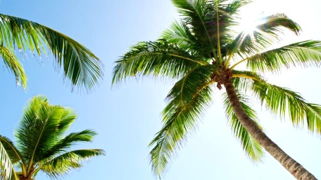 low angle view of coconut palm trees on caribbean beach - palm tree filmów i materiałów b-roll