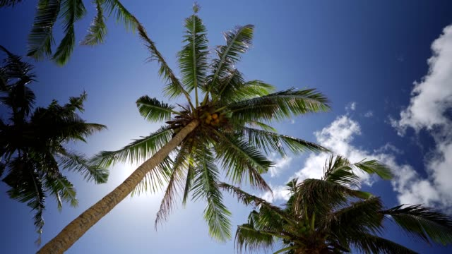 Low angle view of coconut palm trees on the beach