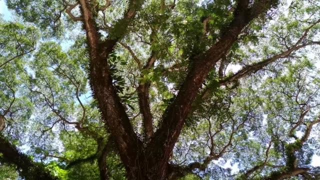 雨の樹の低角度のビュー - ローアングル点の映像素材/bロール