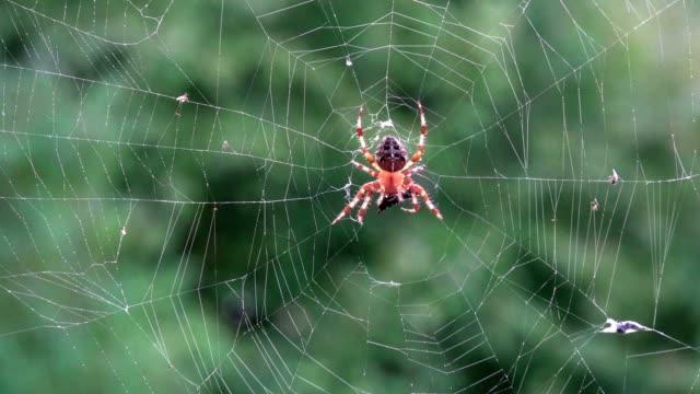 örümcek web görünümünü düşük açılı - www stok videoları ve detay görüntü çekimi