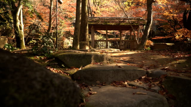 low angle view of wooden pavilion with red maple Plants in Japanese Garden video