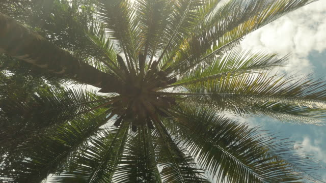 Low Angle View Palm Trees in Forest