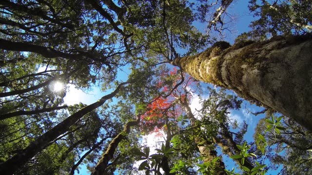 low angle view rain forest with blue sky and sunbeam