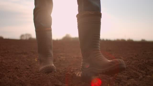 vista ad angolo basso rallentatore. segui i piedi degli agricoltori maschi con gli stivali che camminano attraverso i piccoli germogli verdi di girasole sul campo. gambe di giovane calpestare il terreno asciutto al prato - agricoltura video stock e b–roll