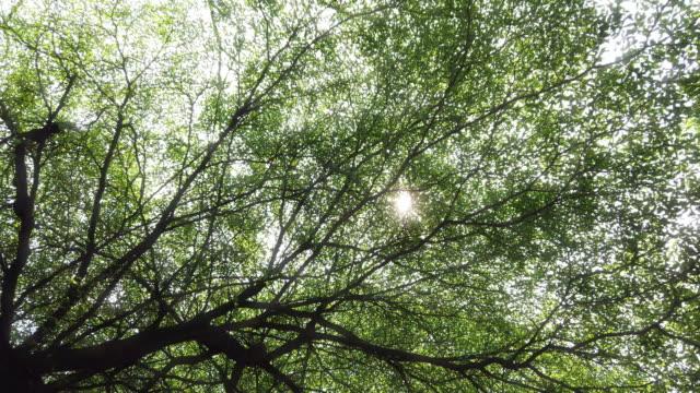 4k düşük açı görünümü geniş güneş ışığı güneş ışığı mercek fişekleri ile orman yaprakları gölgelik ile gözetleme geniş çekim. doğada rahatlama ve tazelik hissi yaz güneşli gün konsepti. - kubbe stok videoları ve detay görüntü çekimi