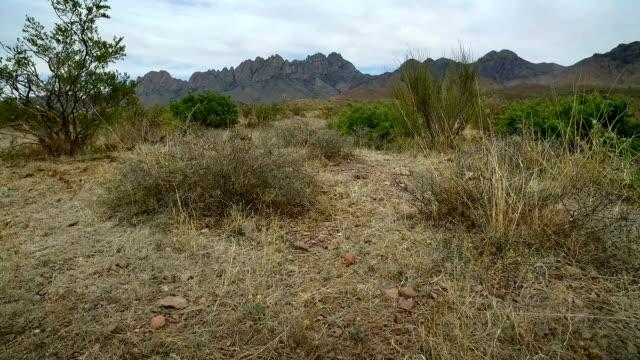 Low Angle Walk Through Desert Vegetation Toward Mountain video