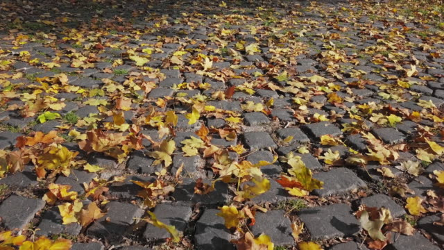 Low level flight over of footpath with autumn leaves.