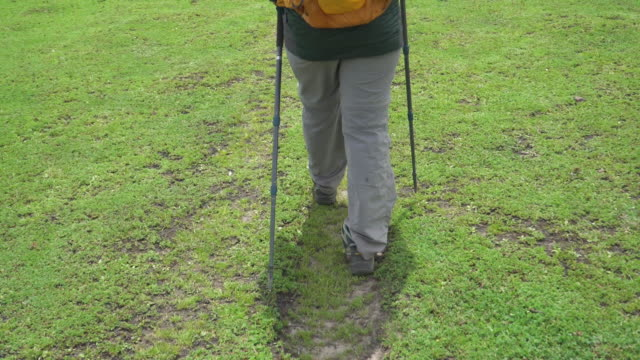 Low section of hiker hiking Low section of hiker walking on green grass with hiking poles stick plant part stock videos & royalty-free footage
