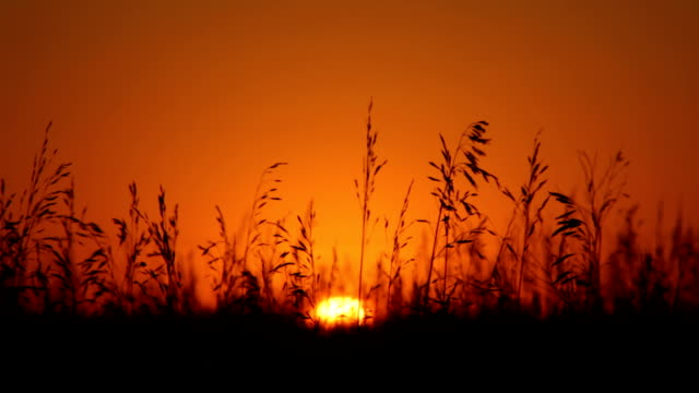 Low sun over fields video