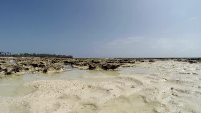 low tide in zanzibar - pongwe bay - ekvatorn latitud bildbanksvideor och videomaterial från bakom kulisserna