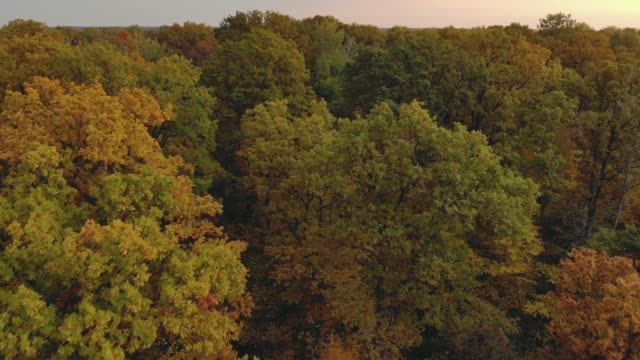 Low-altitude view of colorful red, orange and yellow deciduous trees in the forest at dawn