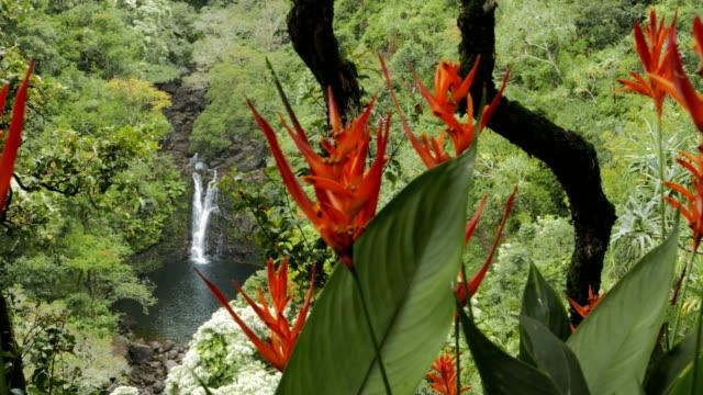 vídeos y material grabado en eventos de stock de puahokamoa inferior cae pan - musgo flora