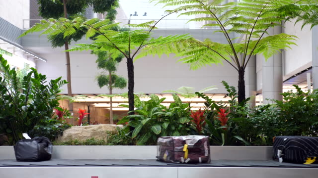 stockvideo's en b-roll-footage met bagage op de gordel - schiphol