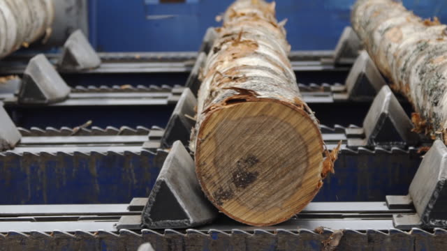Lumber industry. Conveyors of logs in front of cutting machines. The modern cutting line in saw mill. Conveyors on input of cutting line. - video