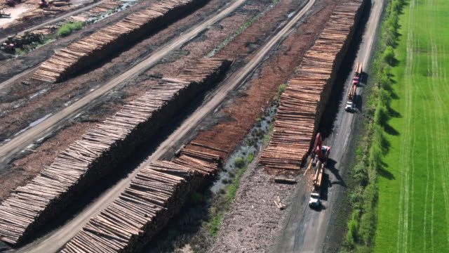 lumber mill operations with logs being processed and sorted. - sussex occidentale video stock e b–roll