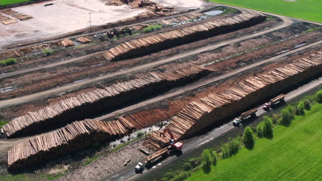 Lumber mill operations with logs being processed and sorted. Aerial views of logs arriving on trucks ready to be sorted and processed at a lumber yard. timber stock videos & royalty-free footage