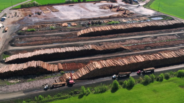 Lumber mill operations with logs being processed and sorted.
