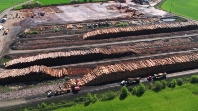 stockvideo's en b-roll-footage met hout molen operaties met logs worden verwerkt en gesorteerd. - boomstam